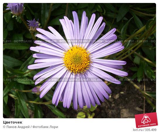 Цветочек, фото № 335499, снято 15 июня 2008 г. (c) Панов Андрей / Фотобанк Лори
