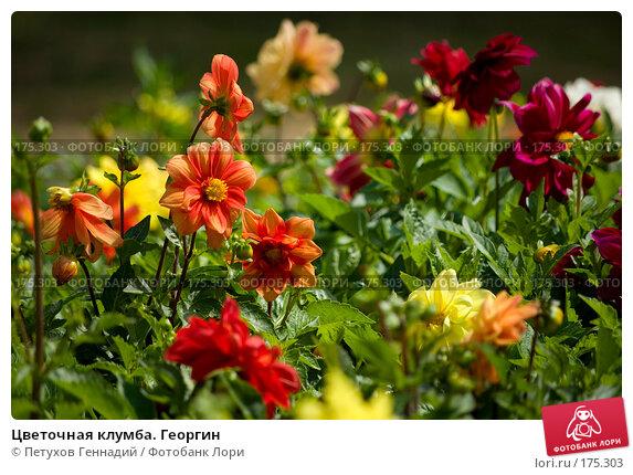 Цветочная клумба. Георгин, фото № 175303, снято 23 июля 2007 г. (c) Петухов Геннадий / Фотобанк Лори