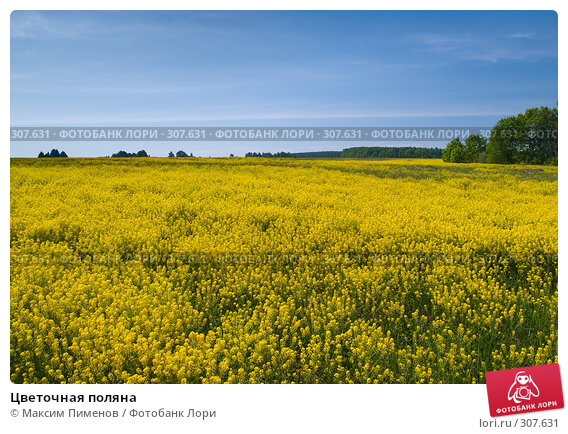 Купить «Цветочная поляна», фото № 307631, снято 22 мая 2007 г. (c) Максим Пименов / Фотобанк Лори