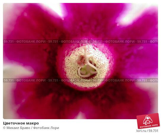 Цветочное макро, фото № 59731, снято 4 апреля 2004 г. (c) Михаил Браво / Фотобанк Лори