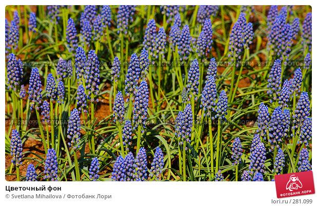 Купить «Цветочный фон», фото № 281099, снято 11 мая 2008 г. (c) Svetlana Mihailova / Фотобанк Лори
