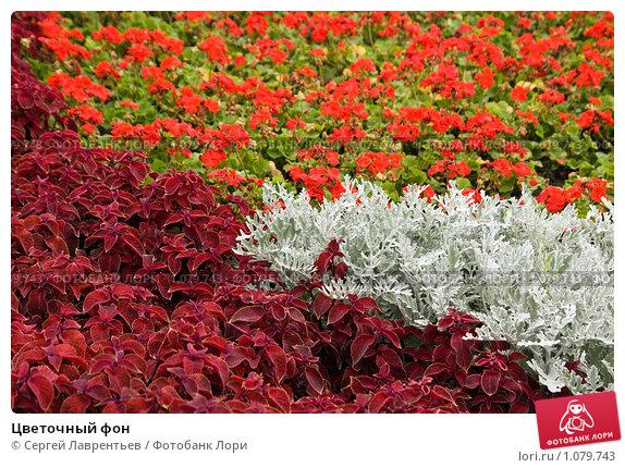 Купить «Цветочный фон», фото № 1079743, снято 6 сентября 2009 г. (c) Сергей Лаврентьев / Фотобанк Лори