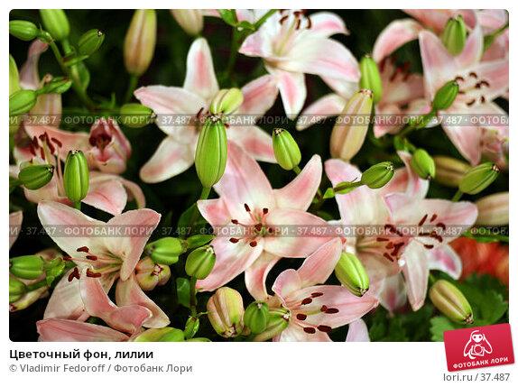 Цветочный фон, лилии, фото № 37487, снято 26 апреля 2007 г. (c) Vladimir Fedoroff / Фотобанк Лори