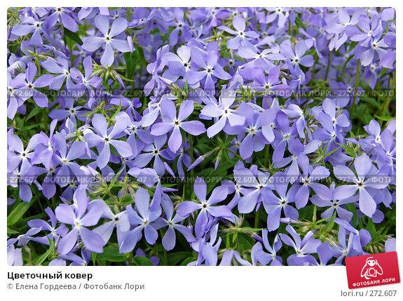 Цветочный ковер, фото № 272607, снято 3 мая 2008 г. (c) Елена Гордеева / Фотобанк Лори