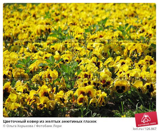 Купить «Цветочный ковер из желтых анютиных глазок», фото № 126867, снято 16 июня 2007 г. (c) Ольга Хорькова / Фотобанк Лори