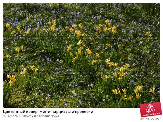 Цветочный ковер: мини-нарциссы и пролески, фото № 22859, снято 11 марта 2007 г. (c) Tamara Kulikova / Фотобанк Лори