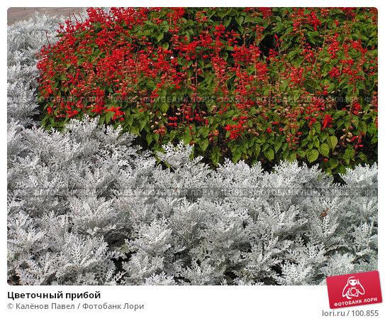 Цветочный прибой, фото № 100855, снято 4 сентября 2005 г. (c) Калёнов Павел / Фотобанк Лори
