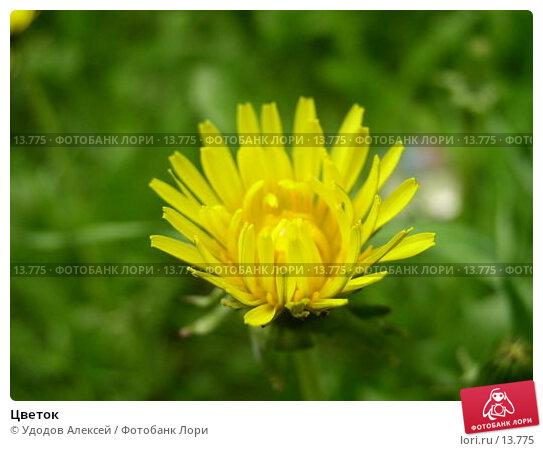 Цветок , фото № 13775, снято 22 мая 2005 г. (c) Удодов Алексей / Фотобанк Лори