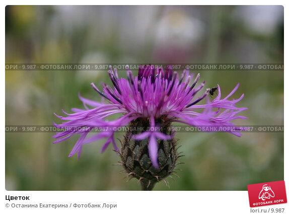 Цветок, фото № 9987, снято 7 августа 2005 г. (c) Останина Екатерина / Фотобанк Лори