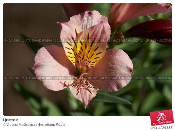 Цветок, эксклюзивное фото № 24835, снято 23 июля 2006 г. (c) Ирина Мойсеева / Фотобанк Лори