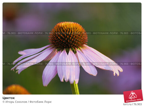 Цветок, фото № 76903, снято 16 января 2017 г. (c) Игорь Соколов / Фотобанк Лори