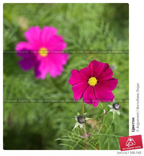 Купить «Цветок», фото № 100143, снято 30 сентября 2007 г. (c) Argument / Фотобанк Лори