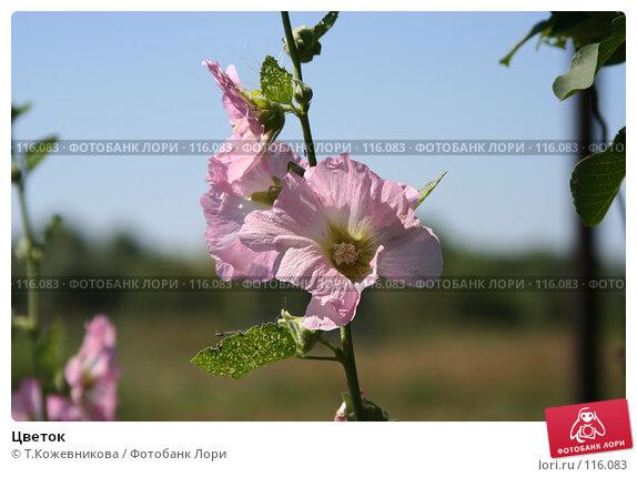 Цветок, фото № 116083, снято 11 августа 2007 г. (c) Т.Кожевникова / Фотобанк Лори