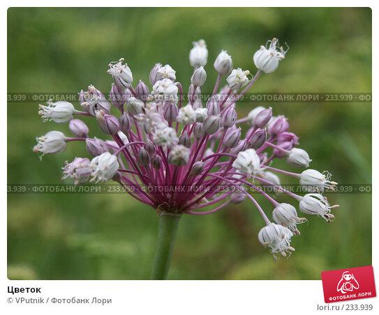 Купить «Цветок», фото № 233939, снято 22 августа 2004 г. (c) VPutnik / Фотобанк Лори