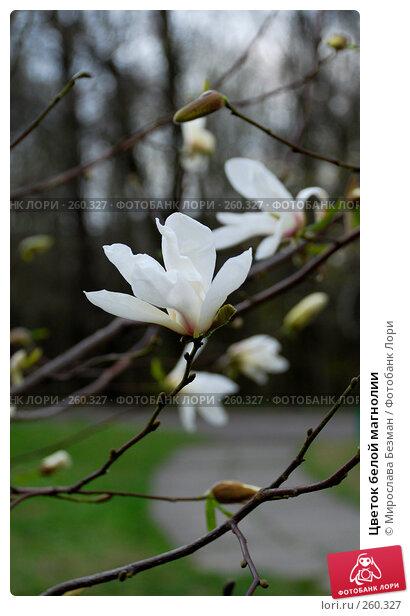 Цветок белой магнолии, фото № 260327, снято 12 апреля 2007 г. (c) Мирослава Безман / Фотобанк Лори