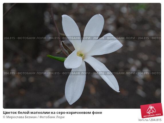Цветок белой магнолии на серо-коричневом фоне, фото № 204815, снято 12 апреля 2007 г. (c) Мирослава Безман / Фотобанк Лори