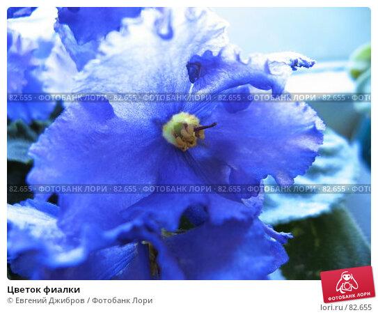 Купить «Цветок фиалки», фото № 82655, снято 29 августа 2007 г. (c) Евгений Джибров / Фотобанк Лори