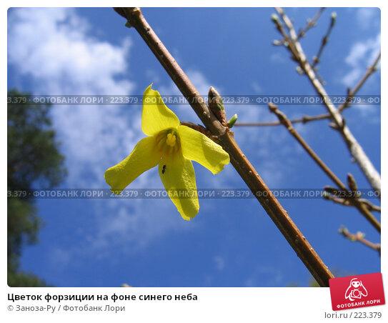 Цветок форзиции на фоне синего неба, фото № 223379, снято 9 мая 2006 г. (c) Заноза-Ру / Фотобанк Лори