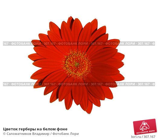 Купить «Цветок герберы на белом фоне», фото № 307167, снято 2 июня 2008 г. (c) Саломатников Владимир / Фотобанк Лори