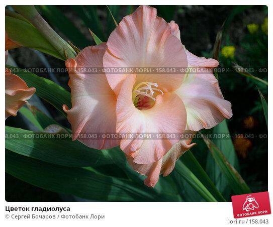 Цветок гладиолуса, фото № 158043, снято 27 августа 2005 г. (c) Сергей Бочаров / Фотобанк Лори