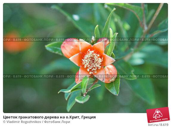 Цветок гранатового дерева на о.Крит, Греция, фото № 8619, снято 16 июня 2005 г. (c) Vladimir Rogozhnikov / Фотобанк Лори