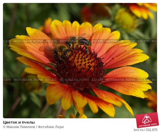 Цветок и пчелы, фото № 332875, снято 3 сентября 2006 г. (c) Максим Пименов / Фотобанк Лори