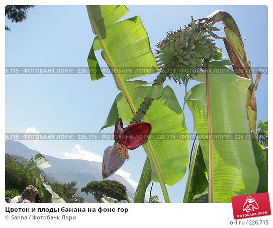 Цветок и плоды банана на фоне гор, фото № 226715, снято 15 мая 2007 г. (c) Sanna / Фотобанк Лори