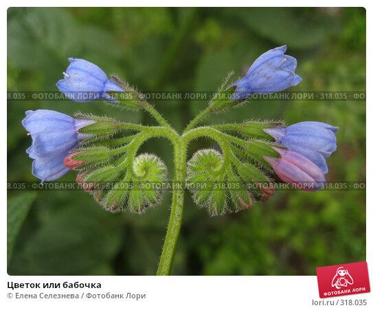 Купить «Цветок или бабочка», фото № 318035, снято 9 июня 2008 г. (c) Елена Селезнева / Фотобанк Лори