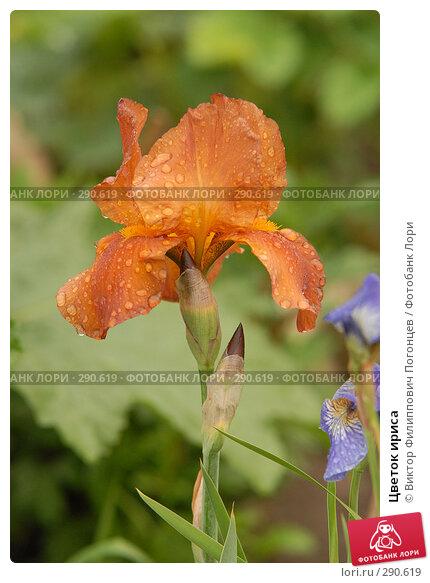 Цветок ириса, фото № 290619, снято 27 мая 2006 г. (c) Виктор Филиппович Погонцев / Фотобанк Лори