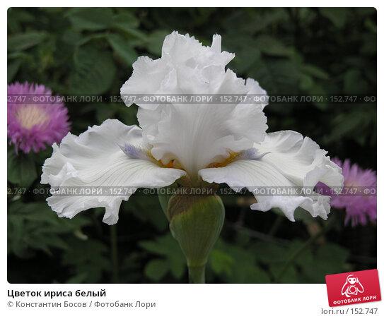 Цветок ириса белый, фото № 152747, снято 24 мая 2007 г. (c) Константин Босов / Фотобанк Лори