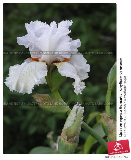 Цветок ириса белый с голубым отливом, фото № 149767, снято 26 мая 2005 г. (c) Константин Босов / Фотобанк Лори