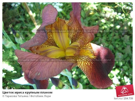 Цветок ириса крупным планом, фото № 204739, снято 22 мая 2007 г. (c) Тарасова Татьяна / Фотобанк Лори
