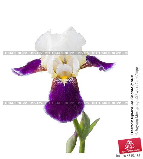 Цветок ириса на белом фоне, фото № 315135, снято 7 июня 2008 г. (c) Эдуард Межерицкий / Фотобанк Лори