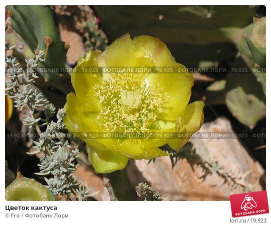 Цветок кактуса, фото № 19923, снято 22 июня 2004 г. (c) Fro / Фотобанк Лори