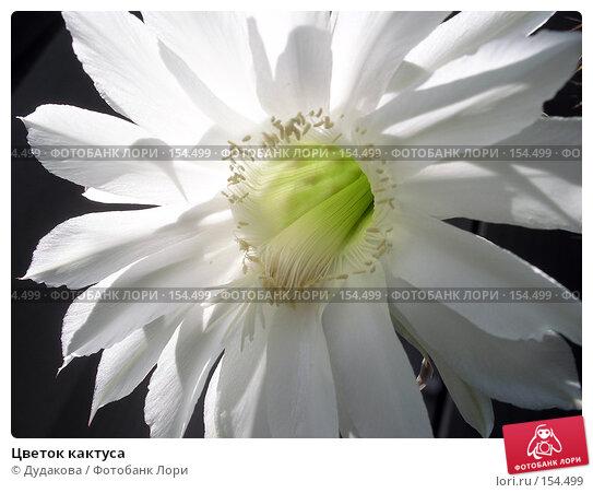 Цветок кактуса, фото № 154499, снято 14 июня 2004 г. (c) Дудакова / Фотобанк Лори