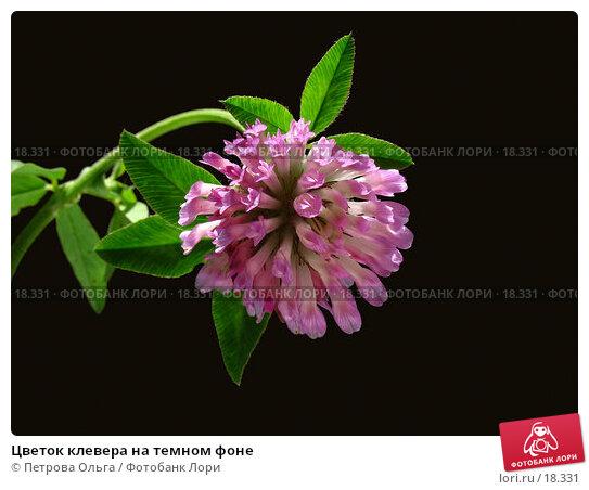 Цветок клевера на темном фоне, фото № 18331, снято 14 сентября 2006 г. (c) Петрова Ольга / Фотобанк Лори