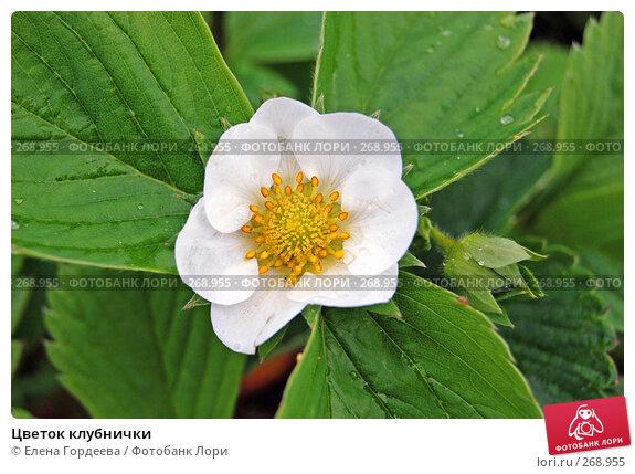 Цветок клубнички, фото № 268955, снято 1 мая 2008 г. (c) Елена Гордеева / Фотобанк Лори