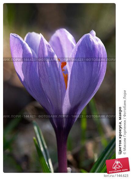 Цветок крокуса, макро, фото № 144623, снято 24 марта 2007 г. (c) Максим Горпенюк / Фотобанк Лори