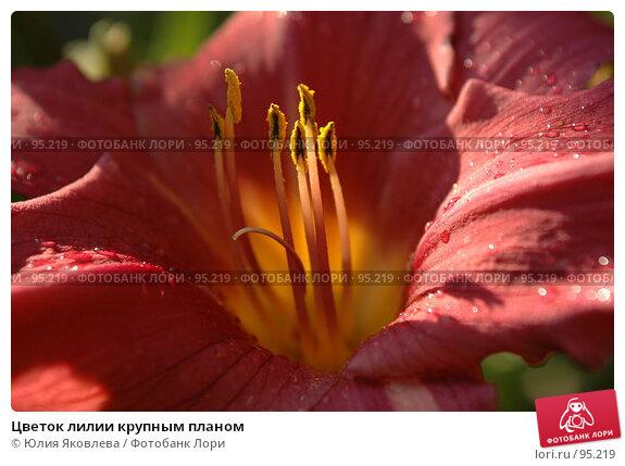 Купить «Цветок лилии крупным планом», фото № 95219, снято 24 августа 2006 г. (c) Юлия Яковлева / Фотобанк Лори