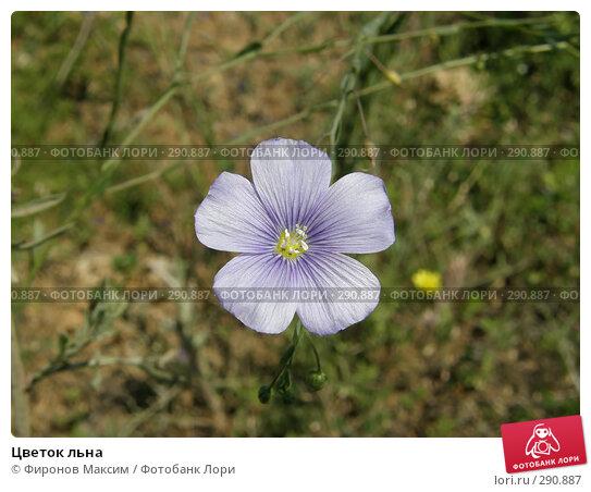 Цветок льна, фото № 290887, снято 18 мая 2008 г. (c) Фиронов Максим / Фотобанк Лори