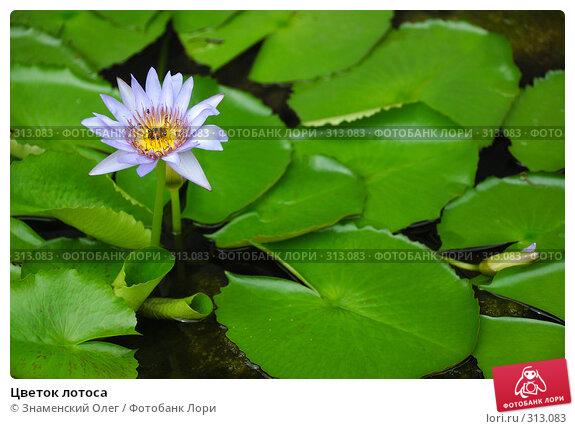 Цветок лотоса, эксклюзивное фото № 313083, снято 23 августа 2007 г. (c) Знаменский Олег / Фотобанк Лори