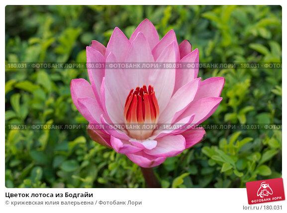 Цветок лотоса из Бодгайи, фото № 180031, снято 22 декабря 2007 г. (c) крижевская юлия валерьевна / Фотобанк Лори