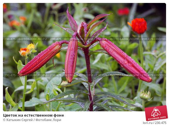 Цветок на естественном фоне, фото № 230475, снято 15 июля 2007 г. (c) Катыкин Сергей / Фотобанк Лори