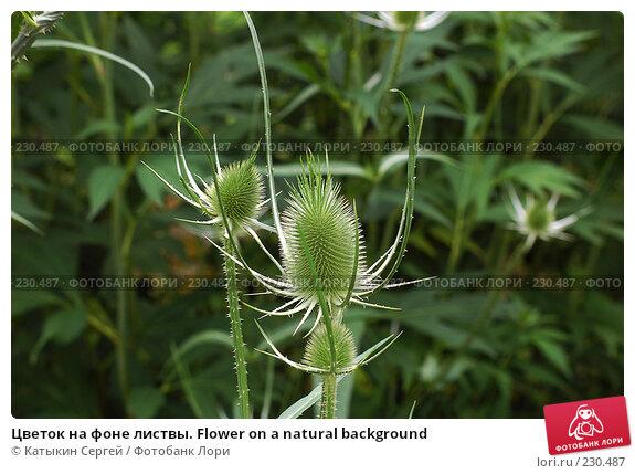Купить «Цветок на фоне листвы. Flower on a natural background», фото № 230487, снято 15 июля 2007 г. (c) Катыкин Сергей / Фотобанк Лори