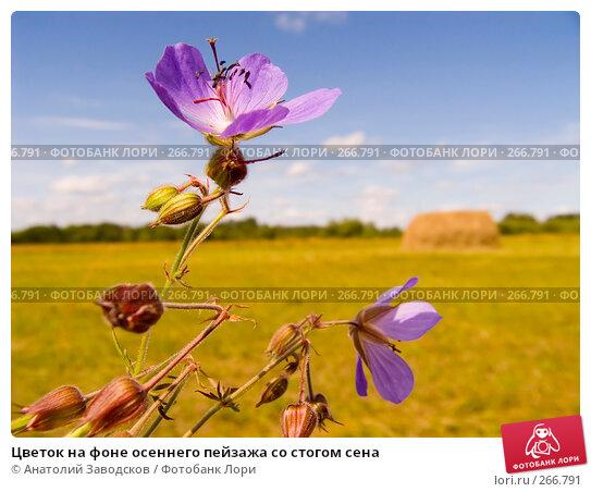 Цветок на фоне осеннего пейзажа со стогом сена, фото № 266791, снято 5 августа 2006 г. (c) Анатолий Заводсков / Фотобанк Лори