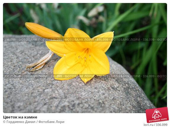 Цветок на камне, фото № 336099, снято 20 июня 2008 г. (c) Гордиенко Данил / Фотобанк Лори