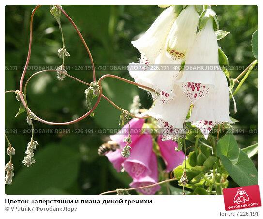Цветок наперстянки и лиана дикой гречихи, фото № 226191, снято 28 июля 2005 г. (c) VPutnik / Фотобанк Лори