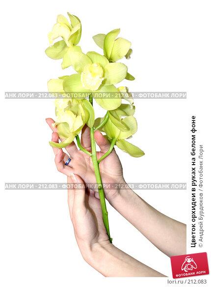 Купить «Цветок орхидеи в руках на белом фоне», фото № 212083, снято 13 февраля 2008 г. (c) Андрей Бурдюков / Фотобанк Лори