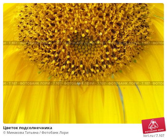 Цветок подсолнечника, фото № 7107, снято 29 июля 2006 г. (c) Минакова Татьяна / Фотобанк Лори