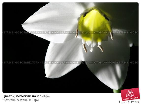 Цветок, похожий на фонарь, фото № 117243, снято 14 ноября 2007 г. (c) Astroid / Фотобанк Лори
